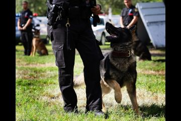 racial working dog